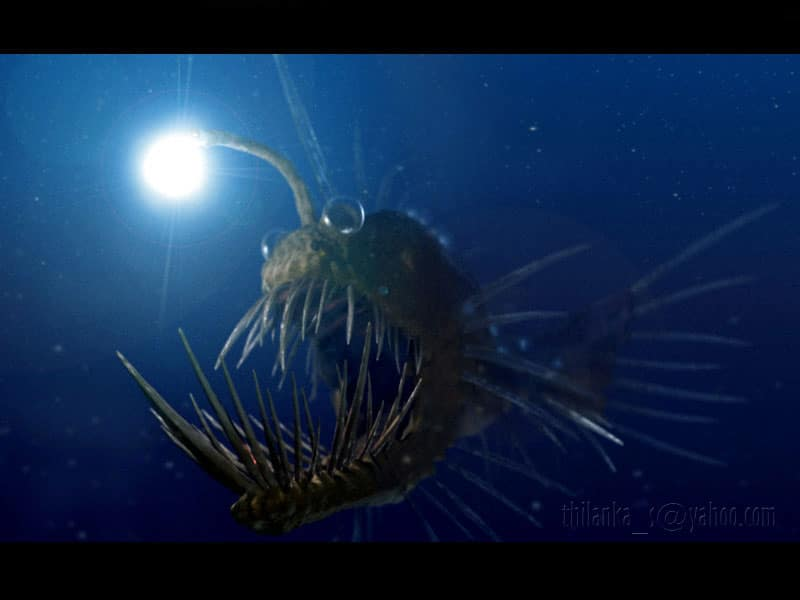 the aspects of deep sea life This discovery spawned new hypotheses about the origin of life on earth—and the possibility of exotic life forms on other planets—that are still hotly debated today for example, during the first deep sea mid-ocean ridge eruption when a submersible was in the area.